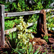 Fence-yucca-rock Poster