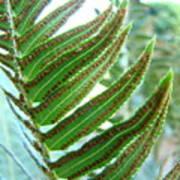 Fern Art Print Green Forest Ferns Baslee Troutman Poster