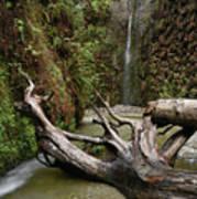 Fern Canyon Creek Poster