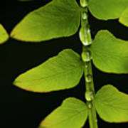 Fern Close-up Nature Patterns Poster