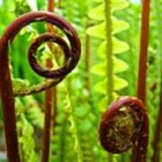 Fern Fronds Fine Art Photography Forest Ferns Green Baslee Troutman Poster