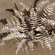 Fern In Sepia Poster