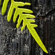 Fern On Burnt Log Poster
