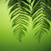 Fern On Green Poster