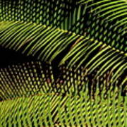 Fern-palm Abtract Poster