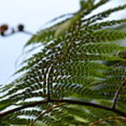 Fern Tree Frond Poster