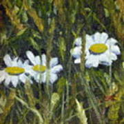 Field Daisies Poster