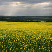 Field Of Gold Sherbrooke Quebec Canada Poster