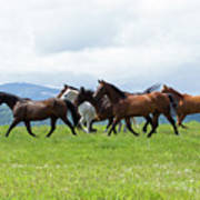 Field Of Horses Poster