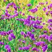 Field Of Purple Flowers Poster