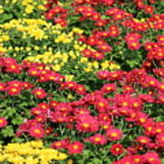 Field Of Red And Yellow Flowers Poster