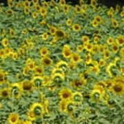 Field Of Sun Poster