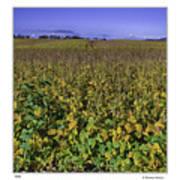 Field Poster