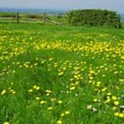 Field With Yellow Flowers Poster