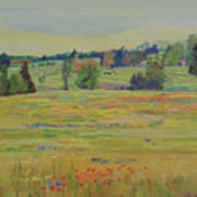 Fields Of Texas Wildflowers Poster