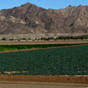 Fields Of Yuma Poster