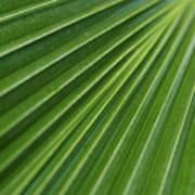 Fiji Fan Palm Poster