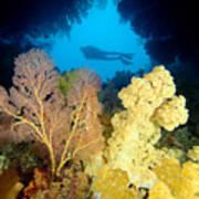 Fiji Underwater Poster