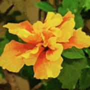 Fijian Hibiscus Abstract In Del Mar 2 Poster