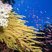 Fijian Reef Scene Poster