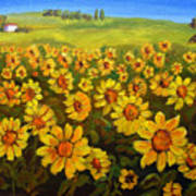 Filed Of Sunflowers Poster