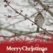 Finch Christmas Poster