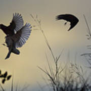 Finches Silhouette With Leaves 5 Poster