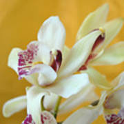 Fine Art- Orchid Poster