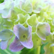 Fine Art Prints Hydrangeas Floral Nature Garden Baslee Troutman Poster