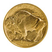 Fine Gold Buffalo Gold Coin On White Background  Poster