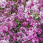 Fine Wine Cafe Apple Blossoms Poster