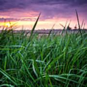Finn Line Grass Poster