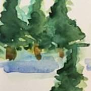 Fir Trees Poster