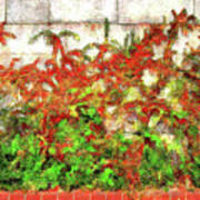 Fire Thorn - Pyracantha Poster