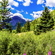 Fireweed, Deer Park Creek, Grand Turk Mountain Poster