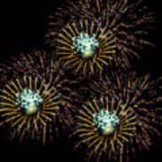 Fireworks - Yellow Spirals Poster