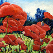 First Of Poppies Poster