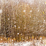 First Snow. Snow Flakes I Poster