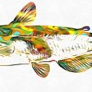 Fish Art Catfish Poster
