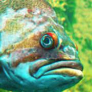 Fish Looking At You Poster