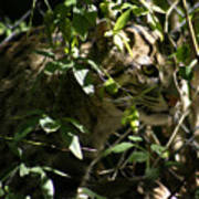 Fishing Cat Poster