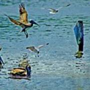 Fishing Pelican And Seagulls Poster