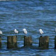 Five Birds Poster
