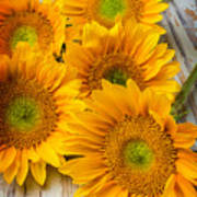 Five Moody Sunflowers Poster