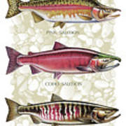Five Salmon Species  Poster