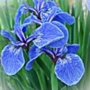 Flag Iris Blues Poster