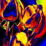 Flamboyant Tulips Poster