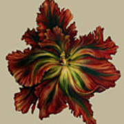 Flame Red Tulip II Poster