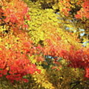 Flaming Autumn Leaves Art Poster