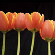 Flaming Tulips Poster